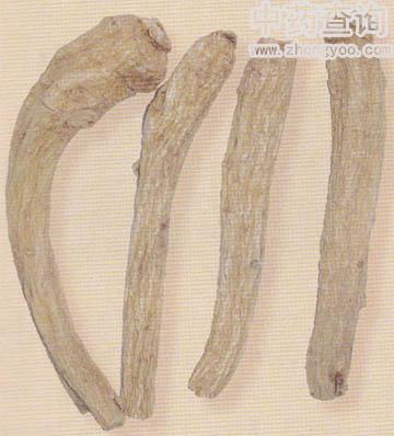 西洋参长枝(药材市场流通的商品)