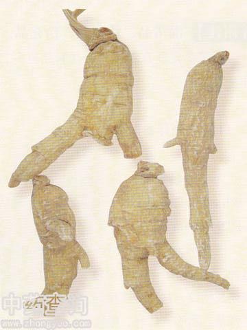 西洋参(国产栽培品)